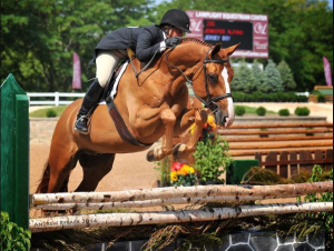 Difference Between Hunter and Jumper Horse