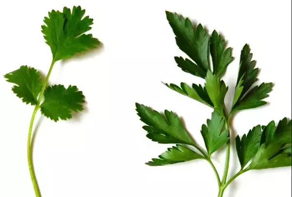 Difference between plants and herbs