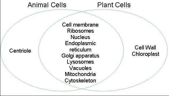 Difference between Animal and Plant Cell