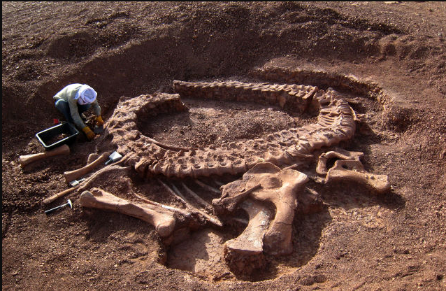 Difference between Archeology and Paleontology