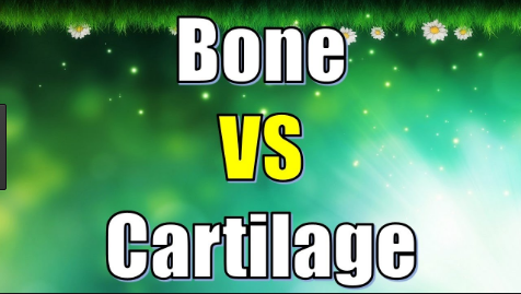 Difference between Bone and Cartilage