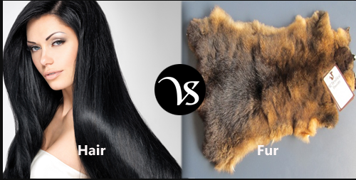 Difference between Hair and Fur