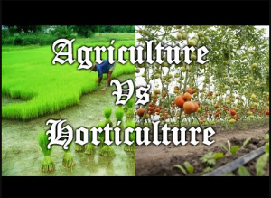 Difference between Horticulture and Agriculture