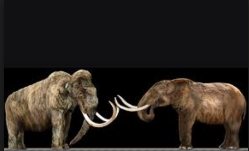 Difference between Mammoth and Elephant