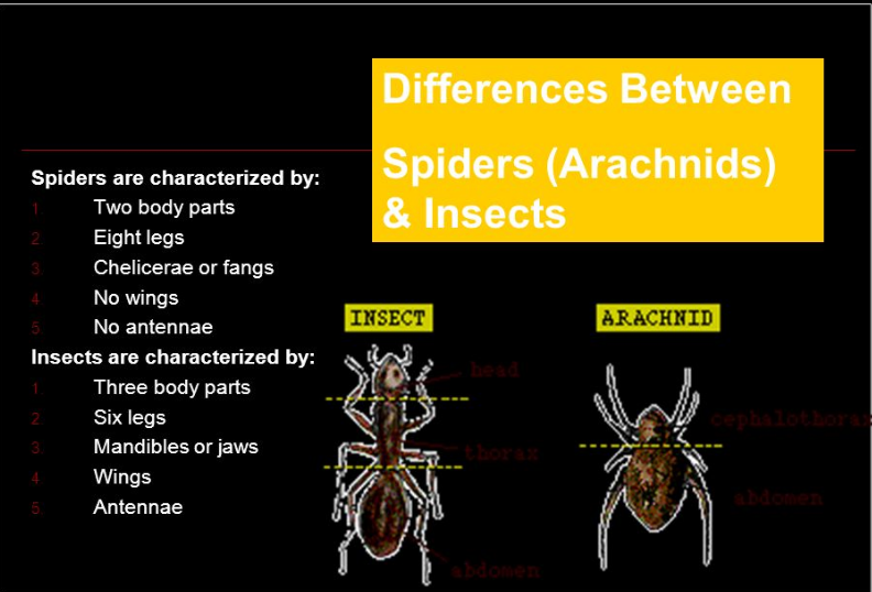 Difference between Spiders and Insects