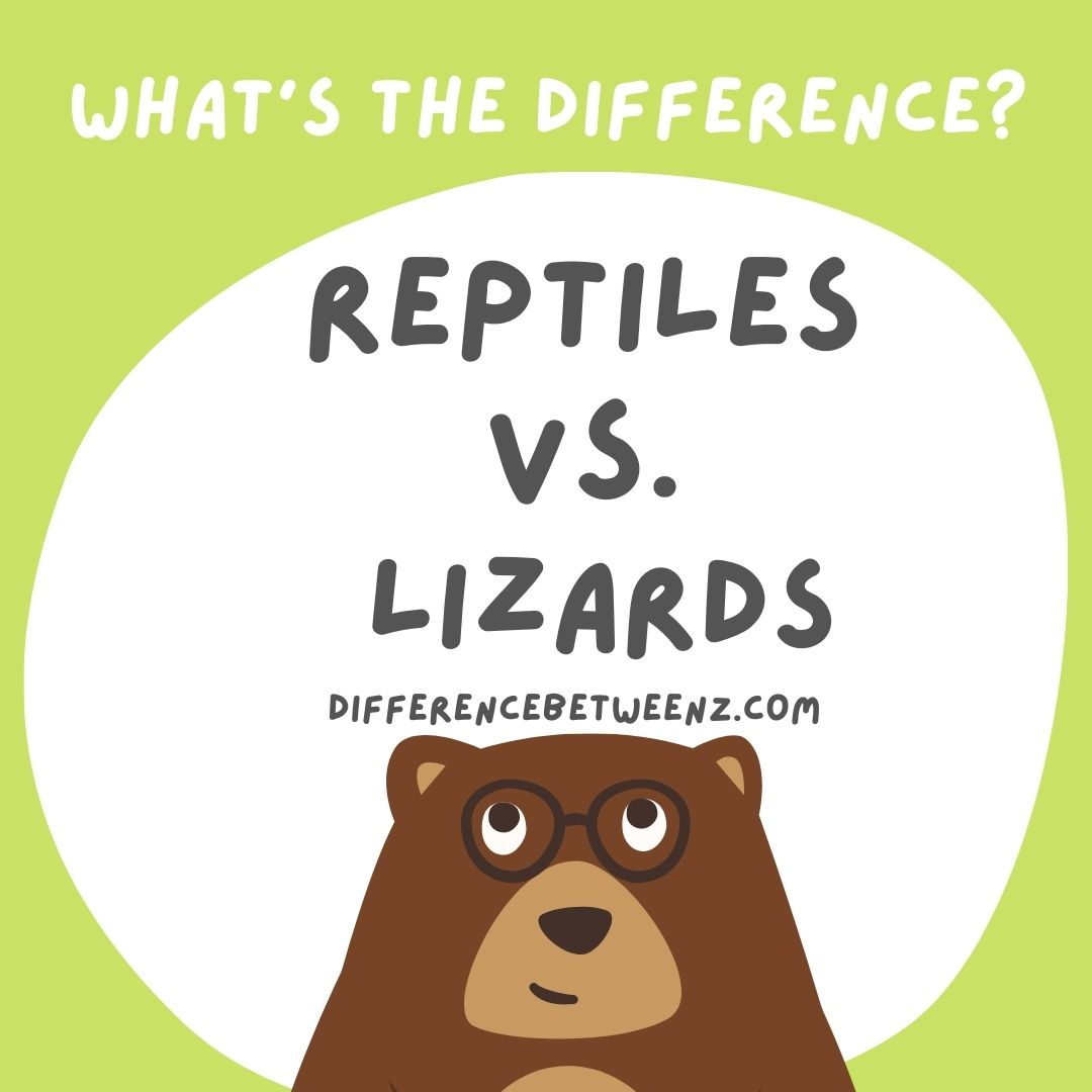 Difference between Lizard and Reptile