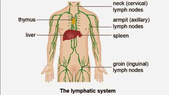 Difference-between-Hodgkin's-and-Non-Hodgkin's-Lymphoma