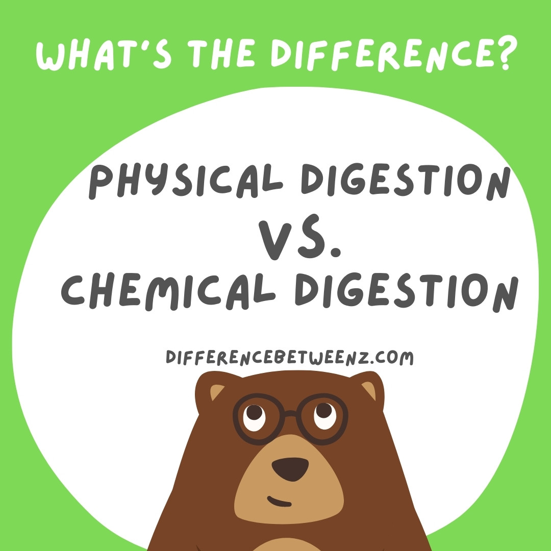 physical digestion vs chemical digestion