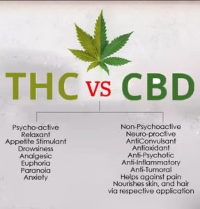 Difference between THC and CBD?