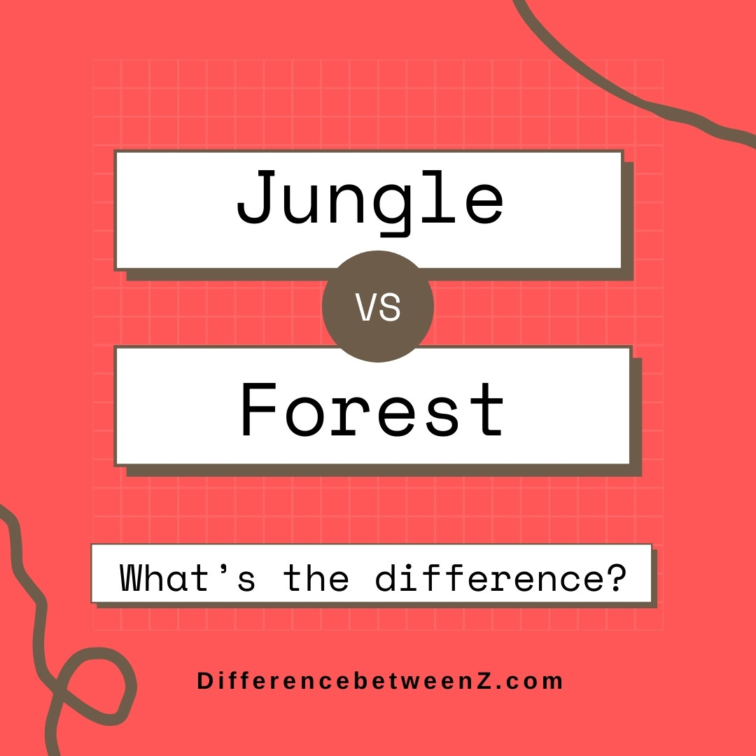 Difference between Jungle and Forest