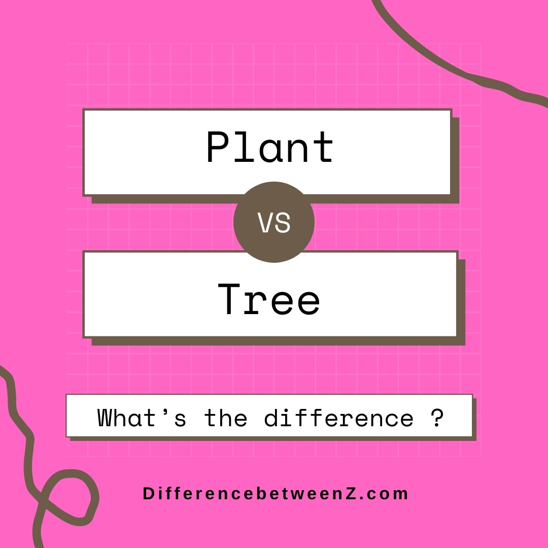 Difference Between Plant And Tree