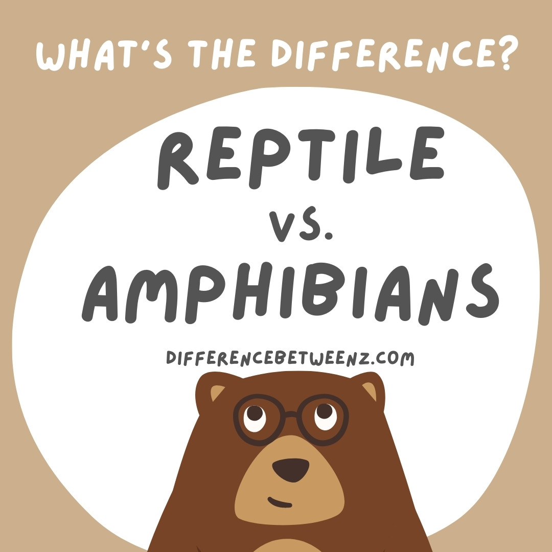 Difference between Reptiles and Amphibians